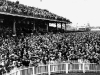 .Woodbine Crowds